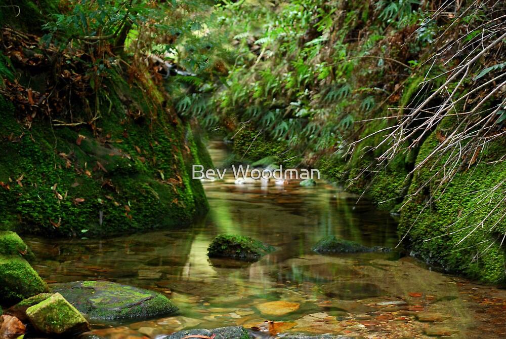 Coachwood Glen - Megalong Valley NSW by Bev Woodman