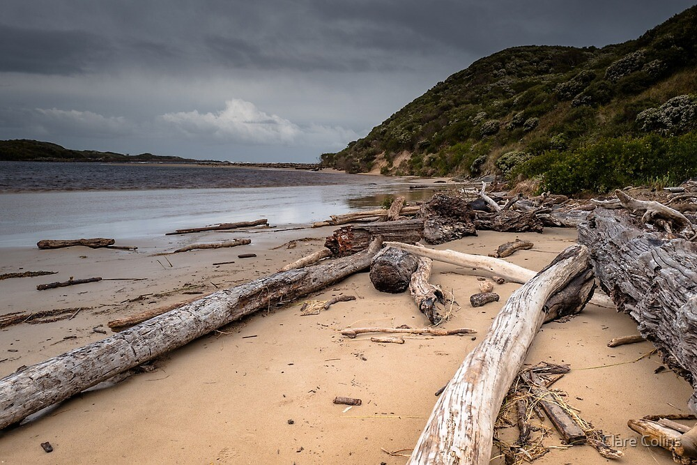 Driftwood at Arthur Beach by Clare Colins
