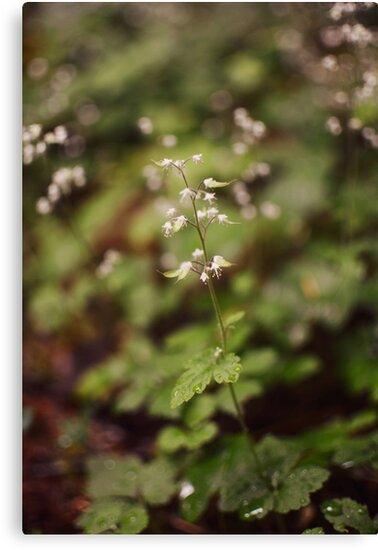 Petites Fleurs by Sophie McIntosh