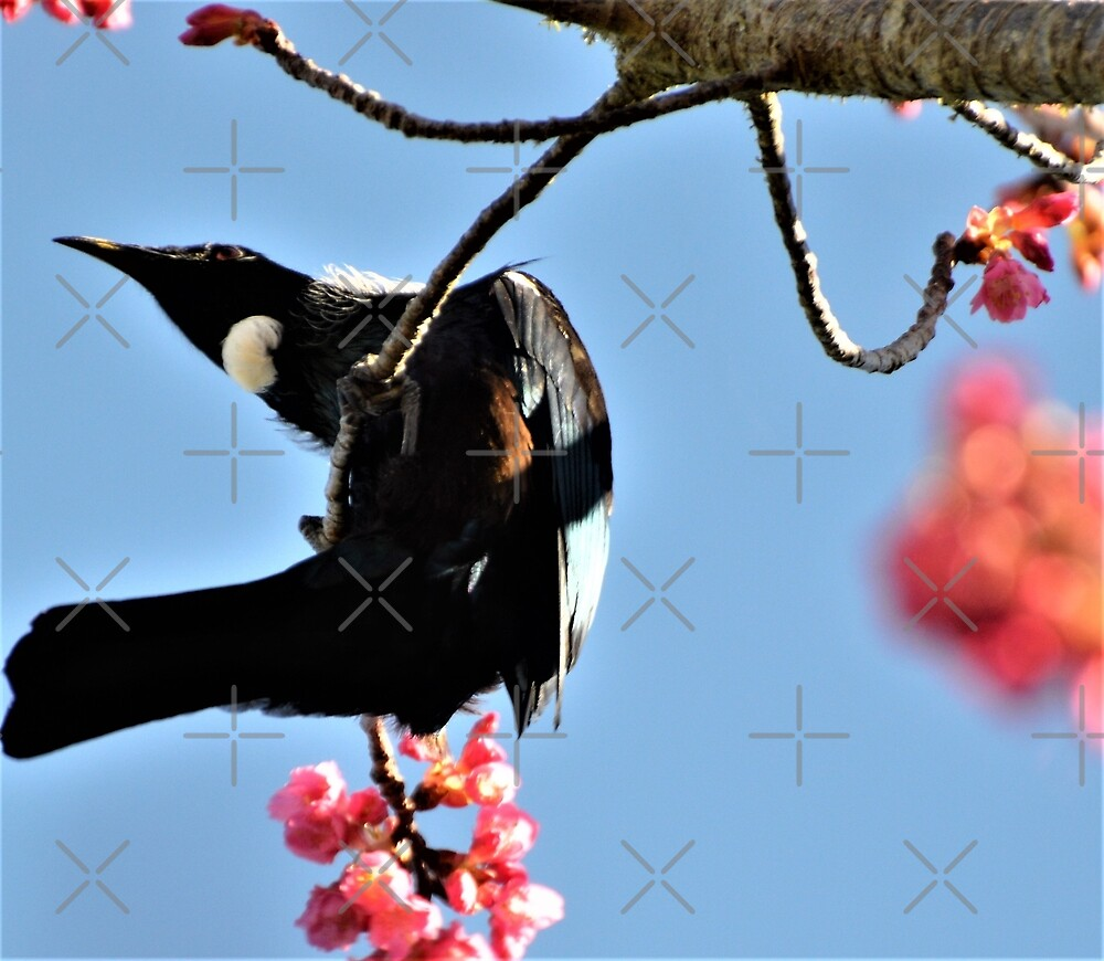 Acrobatics Tui Style! by Barbara Caffell