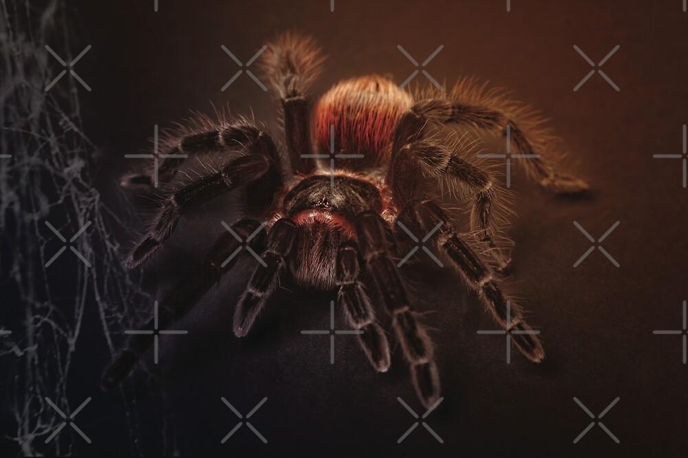 Tarantula by AlainDoyen