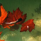 five red leaves by Juilee  Pryor