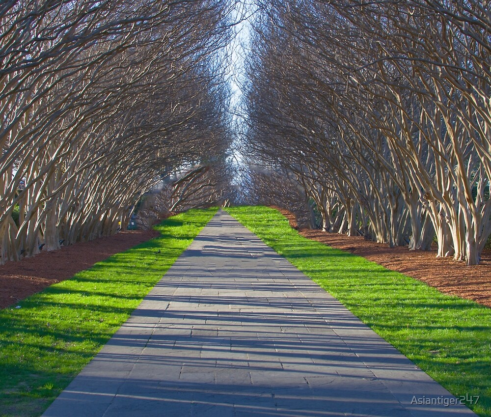 Arched Trees by Asiantiger247