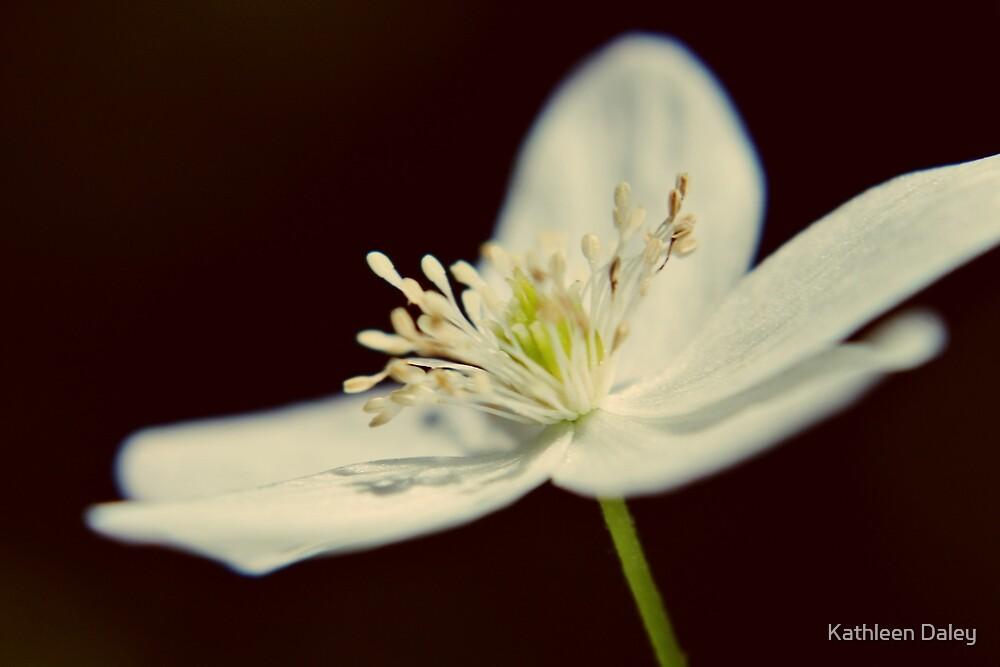 Wood Anemone III by Kathleen Daley