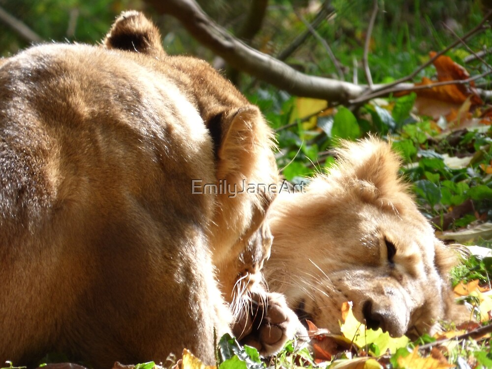 Asiatic Lions by EmilyJaneArt