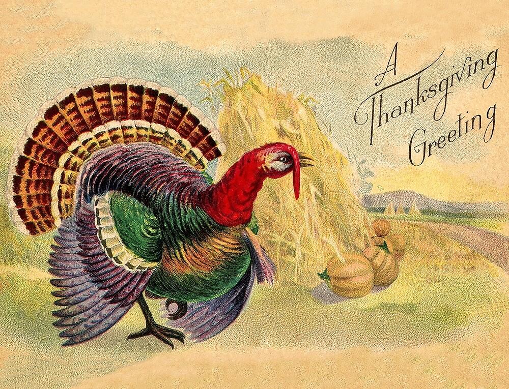 Turkey on a farm, happy thanksgiving day by AmorOmniaVincit