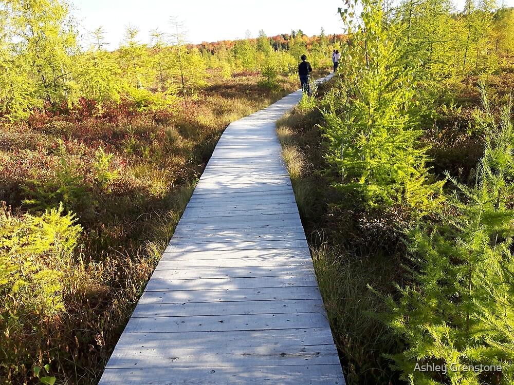 All The Path Ahead by Ashley Grenstone