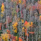 Colorful Autumn Forest by Ryan McGurl