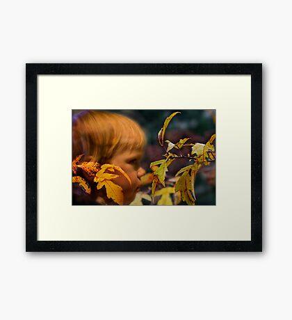 In fall  Framed Print