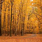 Fall in Door County, Wisconsin by Barb White