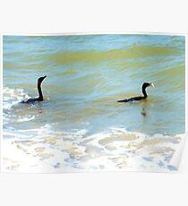 Cormorants' catch Poster