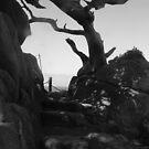 Sunlight Through a Cypress Skeleton by Wayne King