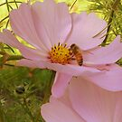Pink Bee in pink world. by becca2425
