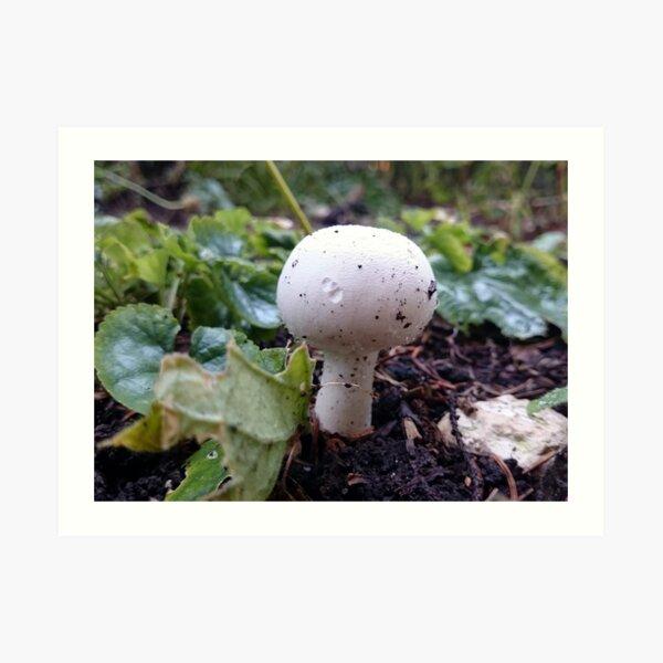 Der Pilz Kunstdruck