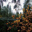 Autumn bridge by Perggals© - Stacey Turner