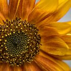 Sunflower in Red by Roxane Bay