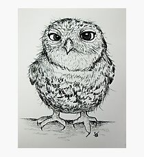 Owly 2 Photographic Print