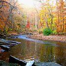 Colorful autumn by Sviatlana