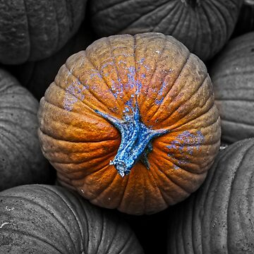 This One Orange Pumpkin is Unique! by gphotobox