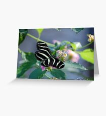 Zebra Longwing - State of Florida Butterfly Greeting Card