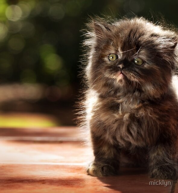 ...and whiskers on kittens... by micklyn