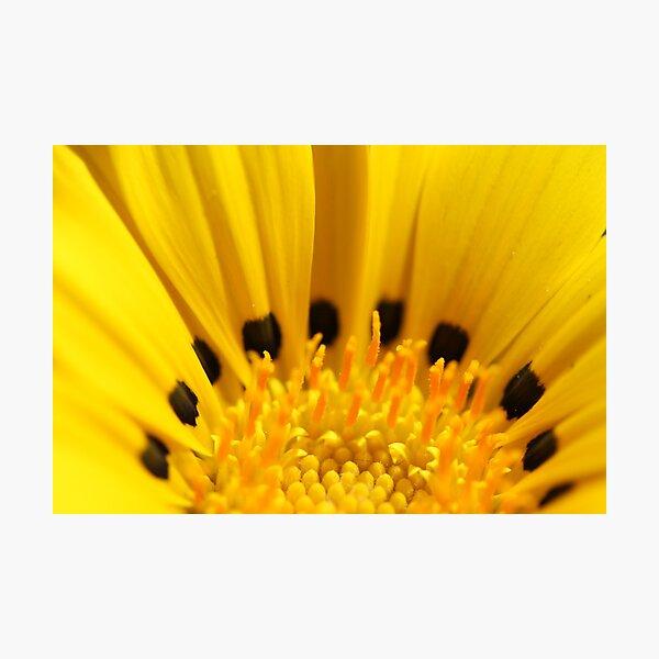 Black and Yellow Photographic Print