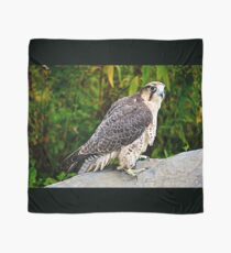 Peregrine Falcon Scarf