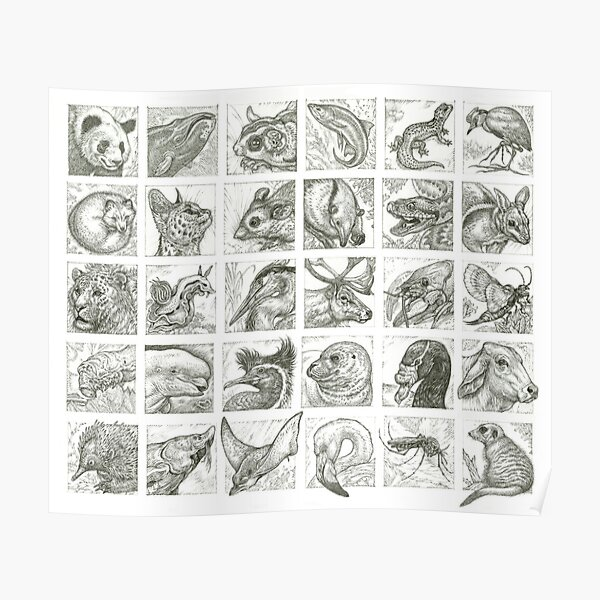 30 Animals Poster
