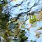 Water Reflections - Abstract US$20 Prize Voucher