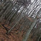 Autumn Forest by cherisong