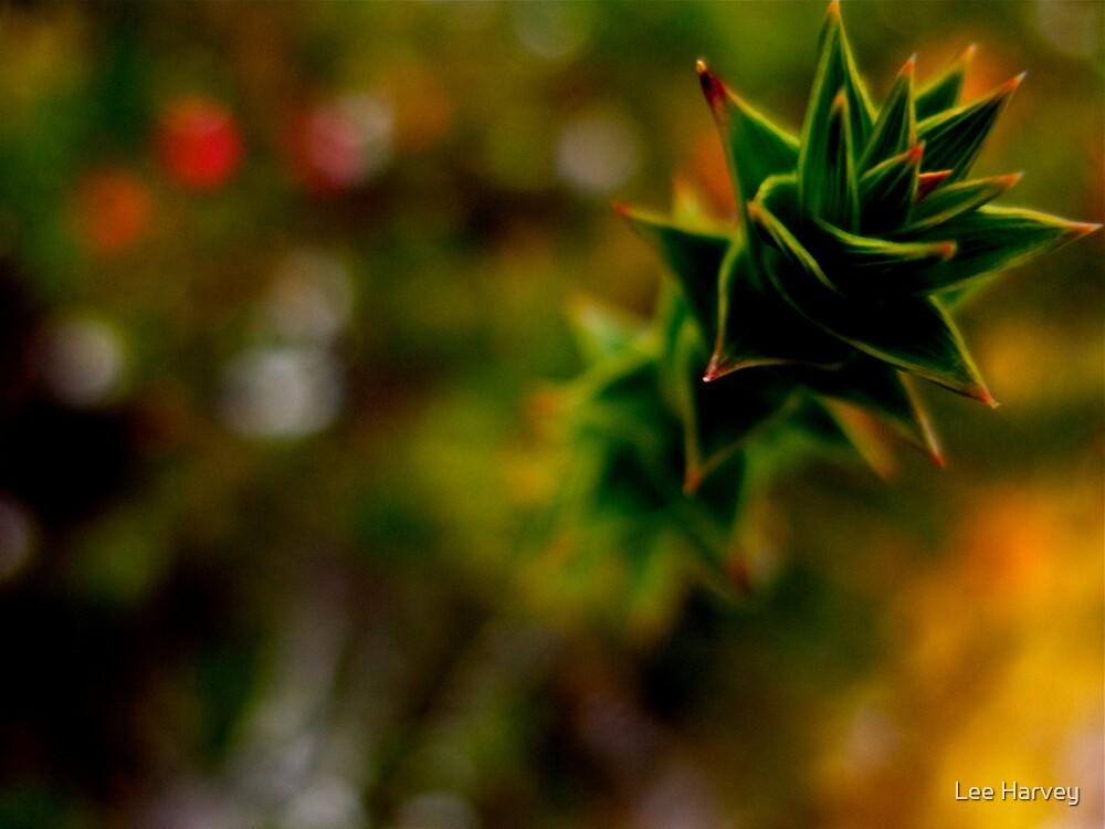 Tasmanian Flora at Dove Lake  by Lee Harvey