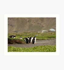 Adolescent Gentoos hanging out Art Print