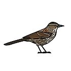 Red-winged Blackbird (Female) by KeesKiwi