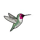 Anna's Hummingbird (male) by KeesKiwi
