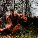 The fall by Antanas