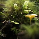 Fungi and Fern Fantasy by Clare Colins