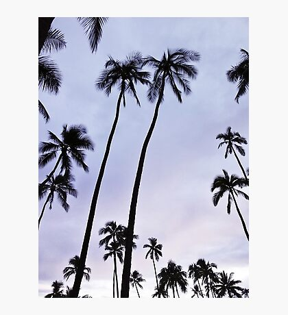 Tropical Palms Black and White Photography Photographic Print