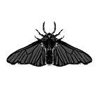 Pagan Animals - Black Moth by Nishita Wojnar