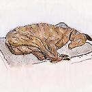 Study of a sleeping greyhound by Andre Gascoigne