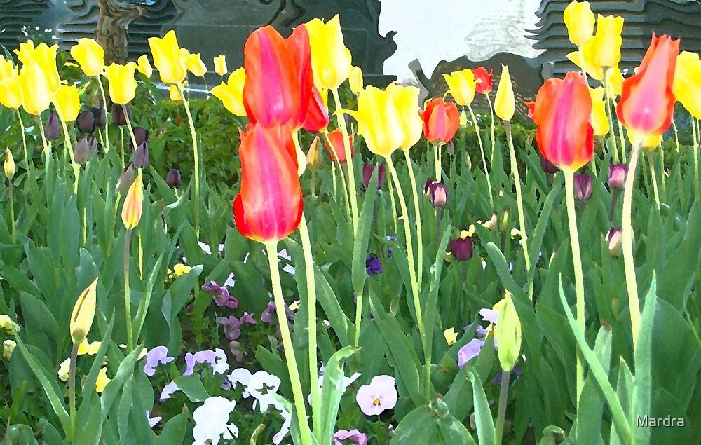 May Flowers by Mardra