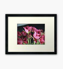 Macro Rose Framed Print