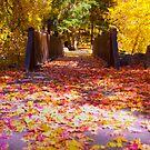 Autumn Bridge by CDNPhoto