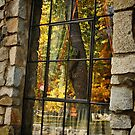 Fall Reflections by Barbara  Brown
