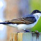 Little Bird by Irvin Le Blanc