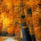 Rustic Autumn Path by Jessica Jenney