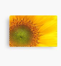 Fibonacci Sequence Canvas Print