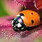 Your very best Bug on a Flower Macro photo challenge!!