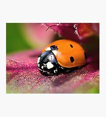 Ladybird - Ladybug - Marienkäfer - Glückskäfer II Photographic Print
