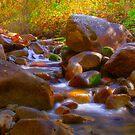 Babbling Brook by CDNPhoto