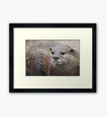 Cute Wiskers Framed Print